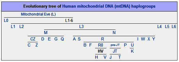 Bonnie Lees DNA